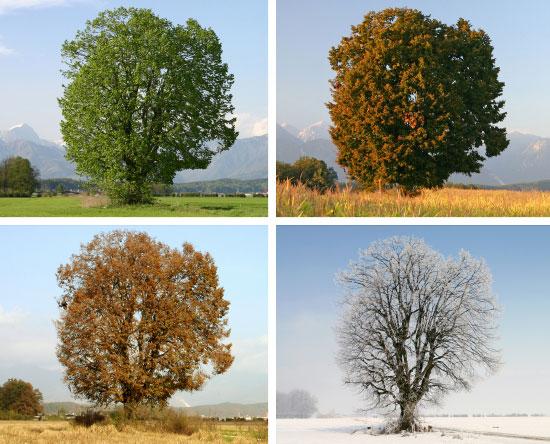 How Do Seasons Change