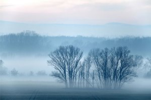 winter-fog