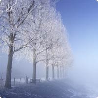 20081219_frost_fog