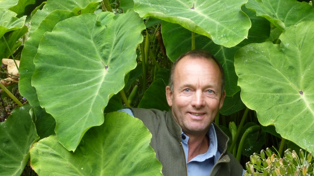 Taro from southern Asia is a plant which may do well in the UK's warming climate
