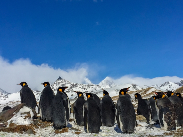 Penguins enjoying Antarctic sunshine