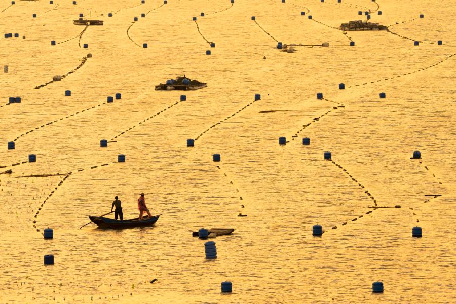 Chinese aquaculture